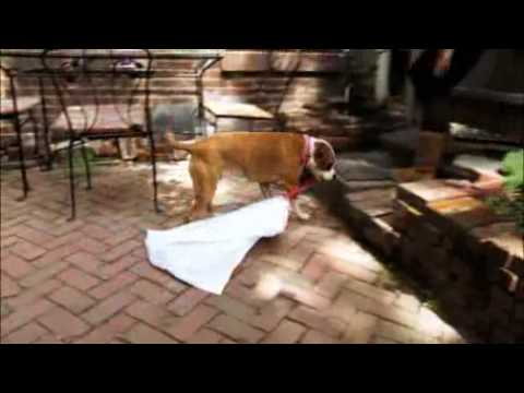 SUPERFETCH: Dog Takes Out the Trash
