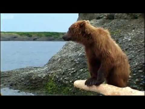 Teddy Bear's Fish Picnic - Bears - Spy in the Woods - BBC