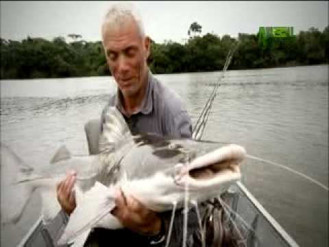 River Monsters - A Growling Piraiba Catfish