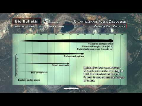 Science Bulletins: Gigantic Snake Fossil Discovered