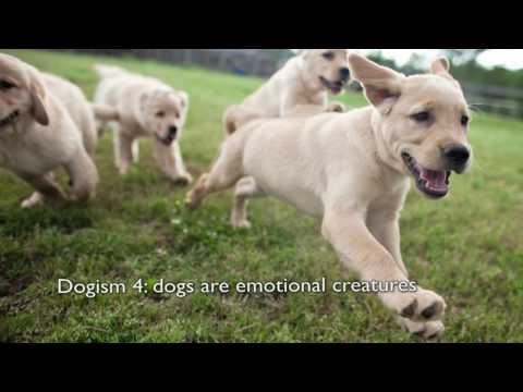 Through a Dog's Eyes | Dogism #4: Dogs are emotional creatures | PBS