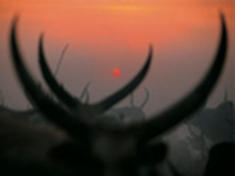 National Geographic Live! - Dinka Cattle Camp: Southern Sudan