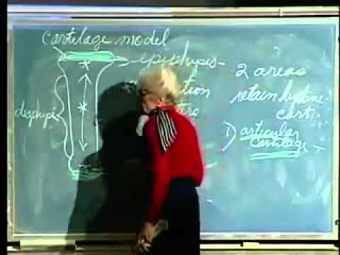 Saylor BIO302: Skeletal System Lecture 7