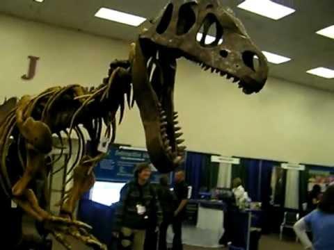 Walking Dinosaur:  Mr Bones