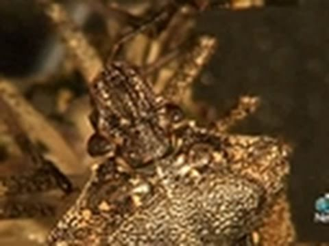 Stink Bugs Invade Homes, Damage Crops