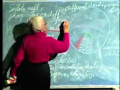 Saylor BIO302: Male Reproductive System Lecture 39