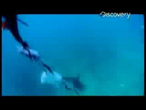 Shark Bites - Magnet Test