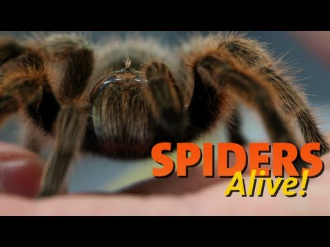 Spiders Alive! Opens July 28