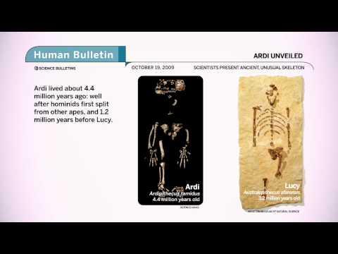 Science Bulletins: Ardi Unveiled