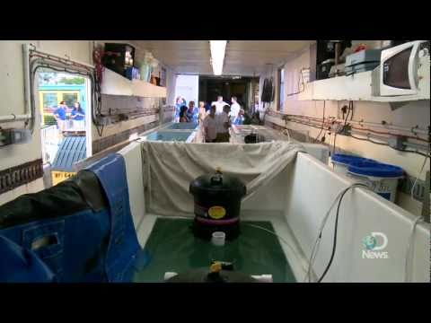 Shark Week 2011: How To Ship a Shark