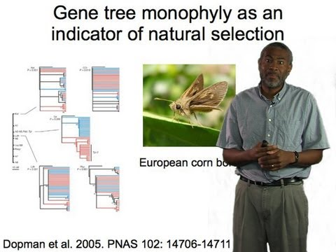 Scott Edwards (Harvard) Part 1: Gene trees and phylogeography