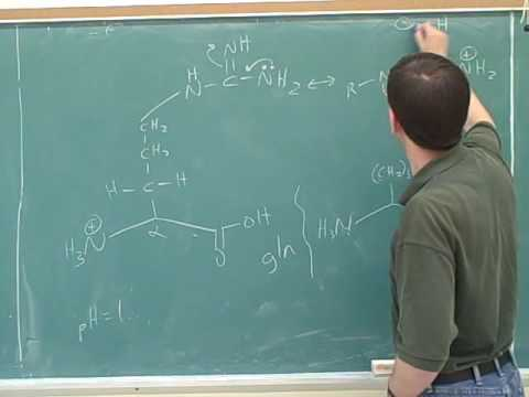 Organic chemistry: Amino acids and peptides (8)
