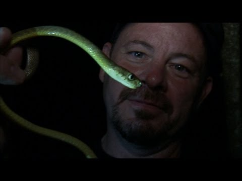 Python Hunters - Tree Snake Night Hunt