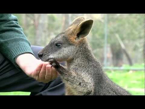 Wallabies and Methane - Periodic Table of Videos