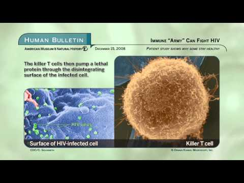 "Science Bulletins: Immune ""Army"" Can Fight HIV"