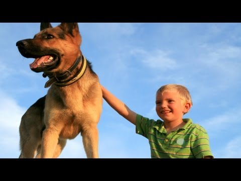 Seizure-Alert Dogs | Epilepsy and Seizure Disorders