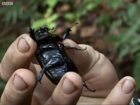 New Species - Expedition Borneo - BBC