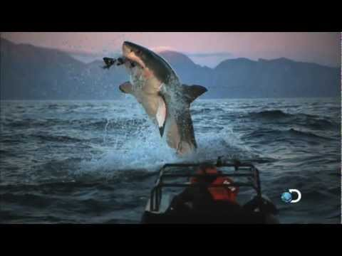 Shark Week 2012 on Discovery*