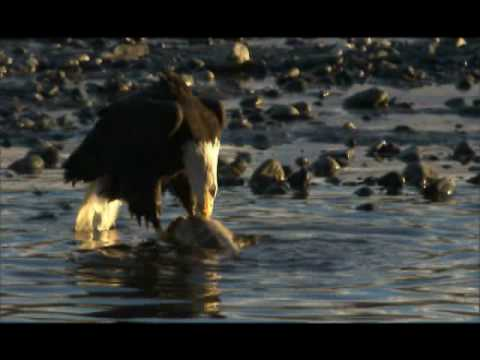 NATURE | American Eagle | Behind the Scenes | PBS
