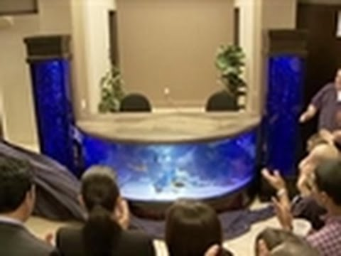 Tanked - Reveal: Shark Tank!
