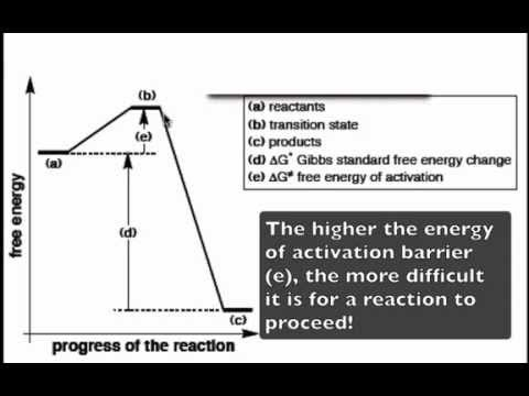 The Reaction Coordinate Diagram