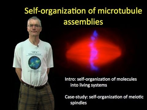 Tim Mitchison (Harvard) Part 1: Self-organization of microtubule assemblies