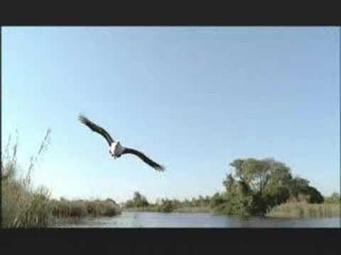 NATURE   Kalahari: The Flooded Desert   Preview   PBS