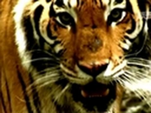 World's Deadliest Towns: Land of Man-Eating Tigers