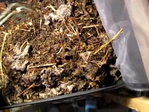 Worm Inn Vermicomposting - Part VI(a)