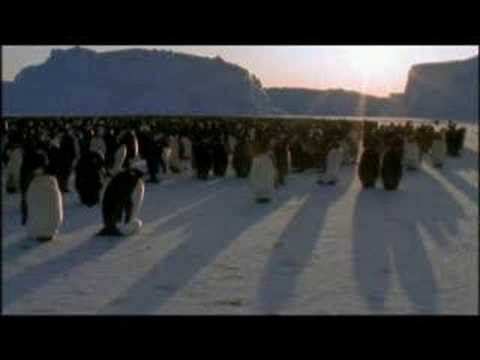 NATURE | Penguins of the Antarctic | Family Reunion | PBS