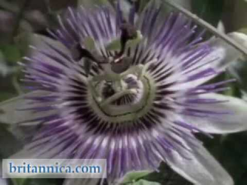 Plant Reproduction: Methods of Pollination