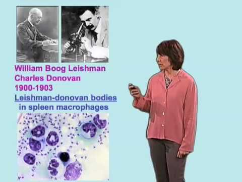 Norma Andrews (Yale) Part 2:  Leishmania spp and Leishmaniasis