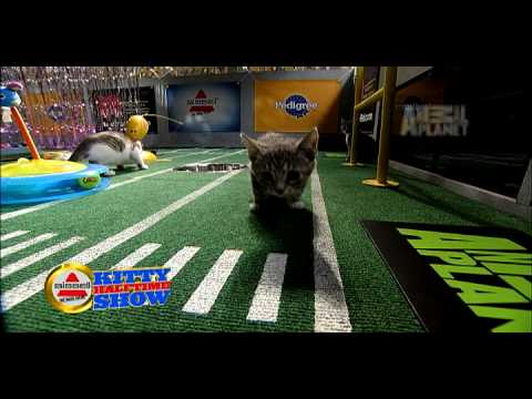 Puppy Bowl VI- Kitty Halftime Show