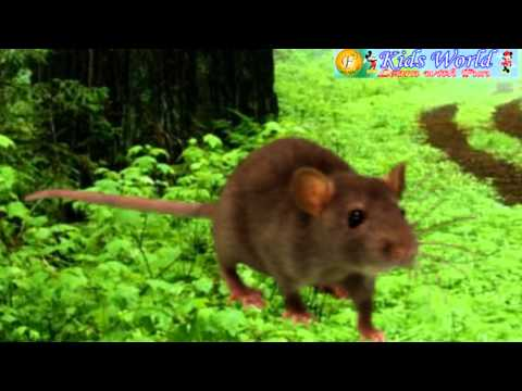 Nursery Rhymes - Chuha (Rat-Mouse)