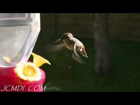 Slow Motion Hummingbirds 4 (HD 720p)