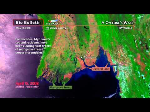 Science Bulletins: A Cyclone's Wake