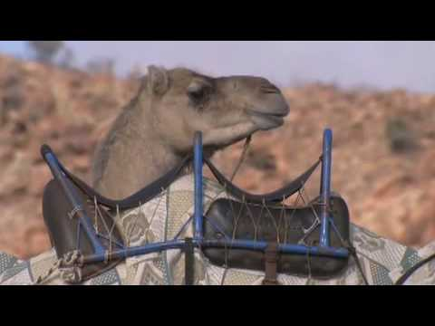 The Coolest Stuff on the Planet - Camel Racing in the Outback
