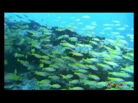 Shark Bay, Western Australia (UNESCO/NHK)