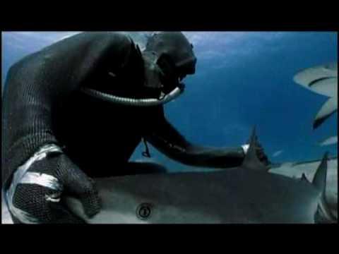 Shark Week 2007 - Hypnotizing a Deadly Shark
