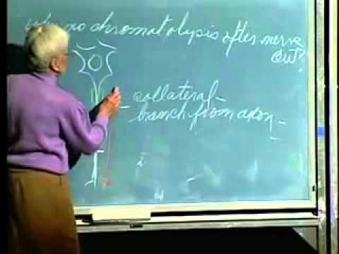 Saylor BIO302: Spinal Cord and Nerves Lecture 27