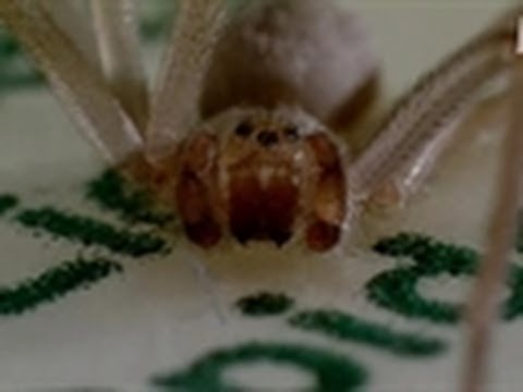 Spider Breeding Ground | Infested!