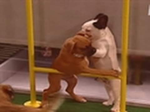 Puppy Bowl III: Tailgating & Tackles