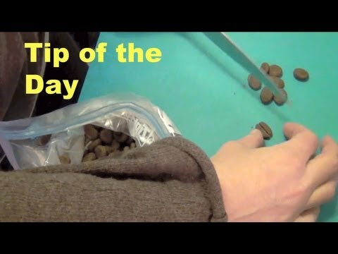 Tip of the day- clicker dog training tricks
