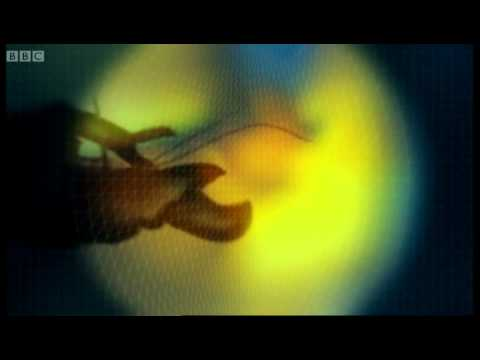 Pistol Shrimp sonic weapon - Weird Nature - BBC