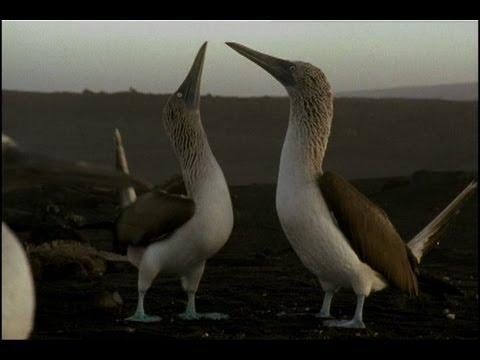 What in the World is a Blue-Footed Booby?