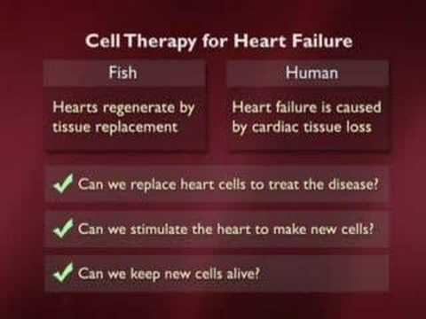 Stem Cells and the End of Aging Part 6 of 6