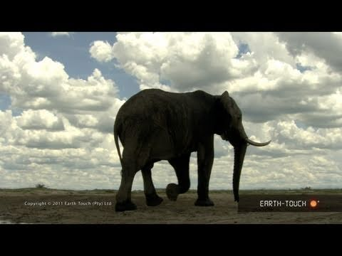 Nature's symphony: Beautiful wildlife with classical music by Mozart