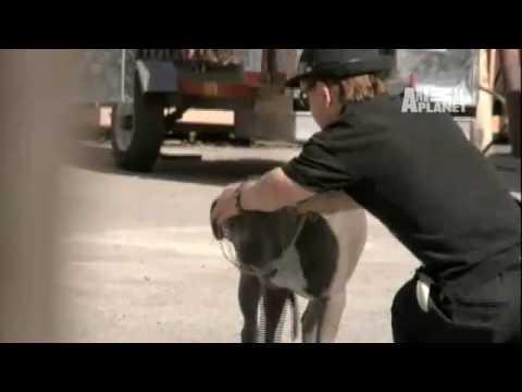Pit Boss: Loose Dog