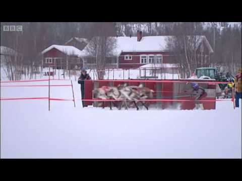 Reindeer racing - Johnny Goes to Lapland - BBC