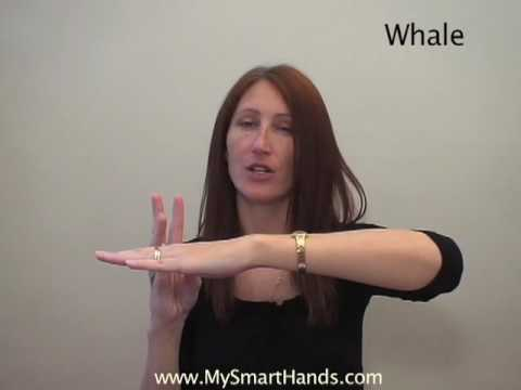 whale - ASL sign for whale